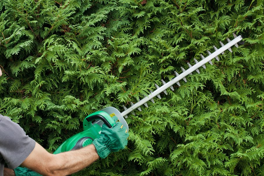 Cutting a hedge